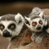Strahlen-wild lebende Tiere