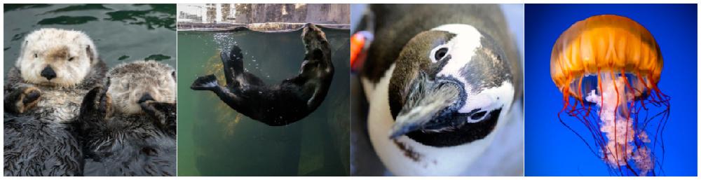Vancouver Aquarium Cams